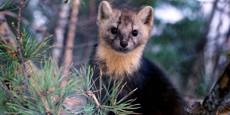Животный мир национального парка Чикой