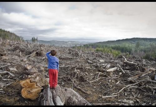 Забор из ворованного леса не дали построить жителю Красночикойского района