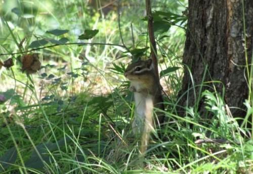 Гениатулин: «Хочу подарить чикоянам на Новый год национальный парк»