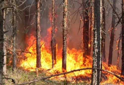 Глава Красночикойского района 16 мая объявил режим чрезвычайной ситуации в связи с лесными и другими ландшафтными пожарами.