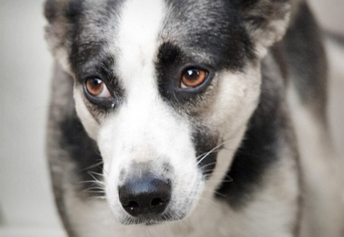 В селе Красный Чикой снова травят собак, тем самым избавляясь как от бездомных псов, так и от домашних. Такое «мероприятие» в селе проводится ежегодно
