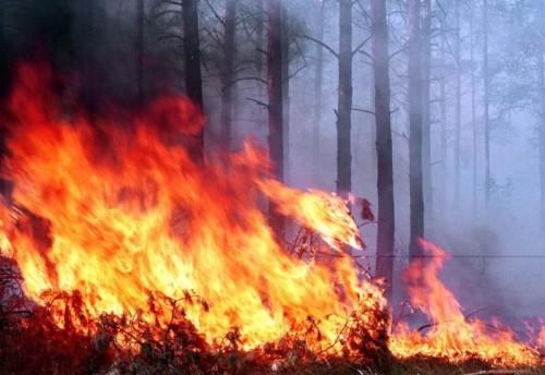 Красночикойский районный суд рассмотрел уголовное дело в отношении местного жителя Николая Черепанова и признал его виновным в уничтожении лесных. Мужчина умышленно поджёг сухую траву - это стало причиной лесного пожара