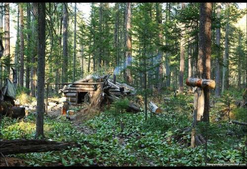 Сбор кедрового ореха для собственных нужд граждан на территории «Национального парка «Чикой» разрешен с 25 августа по 10 октября.