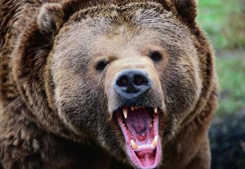 Житель Красночикойского района Забайкальского края попал в реанимацию после встречи с медведем во время охоты в ночь на 2 июля.