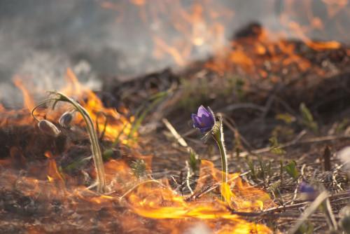 Пенсионера-поджигателя задержали в Красном Чикое