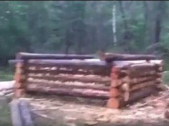 Вырублено 17 деревьев в кедровнике Чикоя