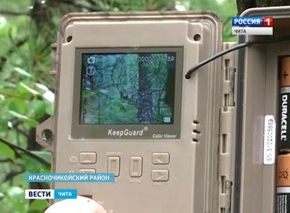 """Наблюдать за дикими животными в парке """"Чикой"""" помогают фотоловушки"""
