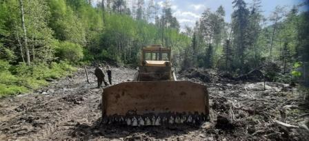 В Забайкалье сотрудники полиции установили подозреваемого в повреждении лесных насаждений